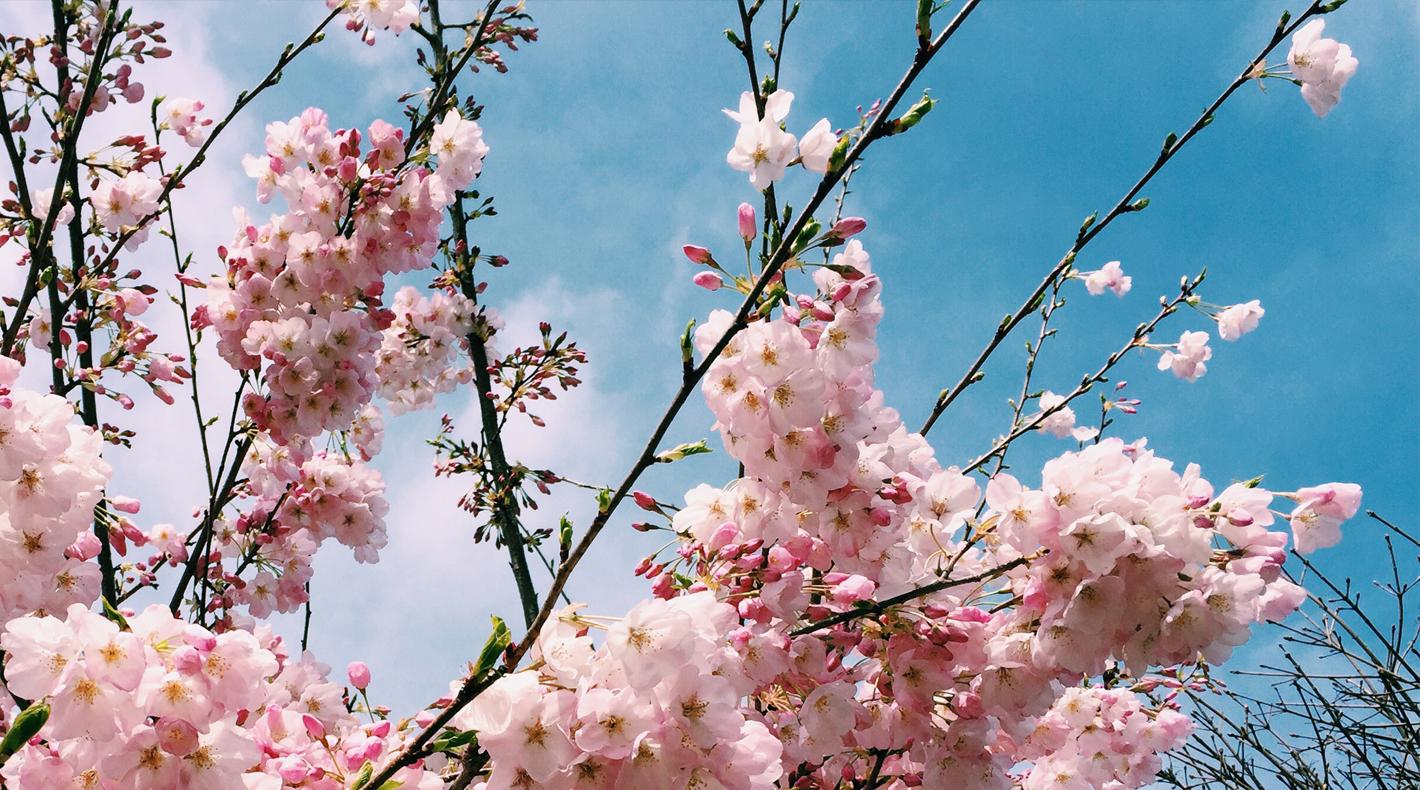 Pretty flowers in Lower Queen Anne